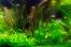 Выращивания аквариумных растений в домашних условиях
